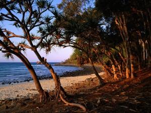 Arboleda en la playa