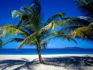 Pequeñas palmeras en la playa