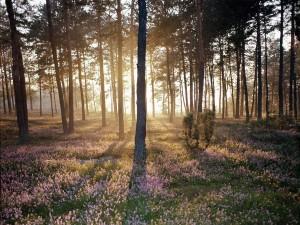 Sol iluminando las flores del bosque
