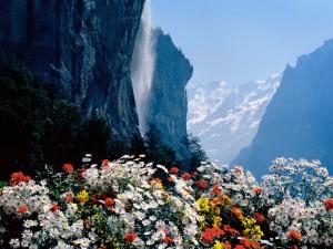 Flores junto a la cascada del Staubbach (Lauterbrunnen, Suiza)