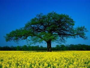Árbol rodeado de flores amarillas