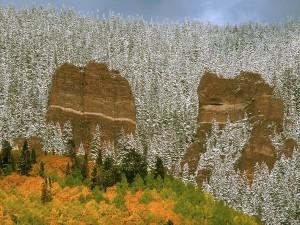 Pinos cubiertos de nieve en otoño