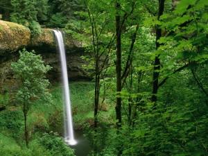 Caída de agua en el Parque estatal Silver Falls (Oregón)