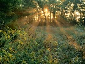 Rayos de sol filtrándose entre los árboles