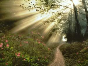 Potentes rayos de sol filtrándose en el bosque