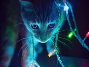 Gatito con luces de Navidad