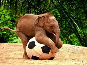Elefante bebé divirtiéndose con una pelota