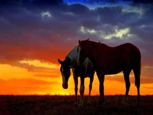 Encantadora pareja de caballos al atardecer