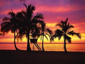 Amanecer entre palmeras