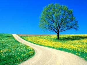 Primavera junto al camino