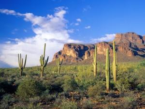 Cactus en el bosque nacional del Tonto (Arizona)