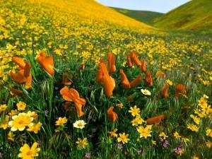 Flores silvestres naranjas y amarillas