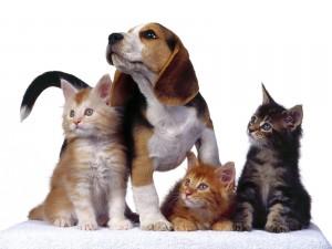 Perro junto a tres gatitos