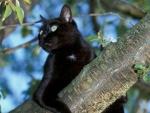 Gato negro sobre la rama de un árbol