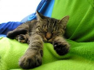 Gato dormido sobre una manta verde