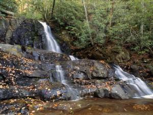 Hojas otoñales junto a la cascada