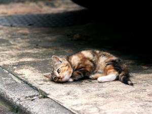 Gatito tumbado en la calle