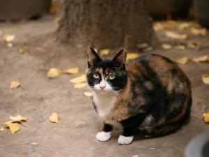 Gato sentado junto a un árbol