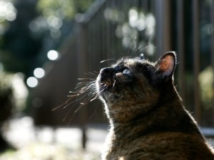 Gato mirando al cielo