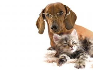 Perro con gafas junto a un gato