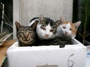 Tres gatos en una caja de corcho