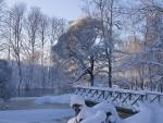 Puente y árboles cubiertos de nieve