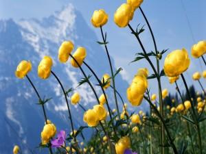 Flores silvestres en la montaña