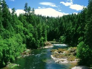 Río entre el pinar