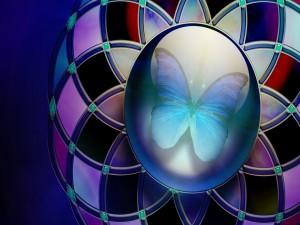 Mariposa en una esfera
