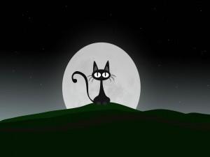 El gato de la luna