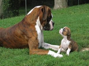 Padre e hijo charlando