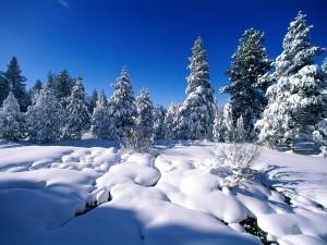 Gruesa capa de nieve en la naturaleza