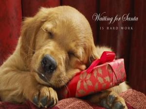 Perrito durmiendo sobre un regalo de Navidad