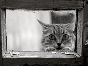 Gato asomado por una pequeña ventana
