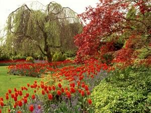 Tulipanes en un hermoso parque