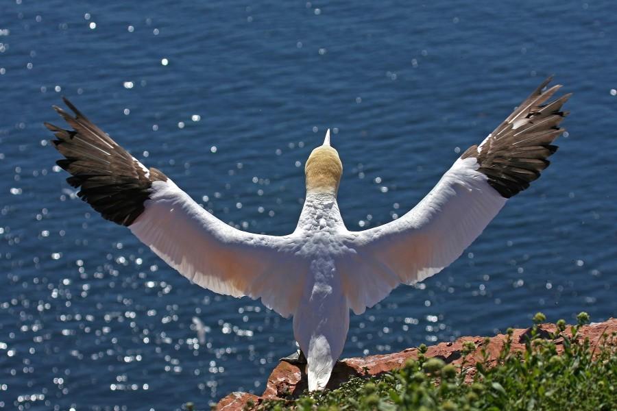 Listo para volar libre