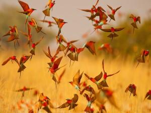 Abejarucos volando libremente