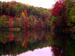Río que refleja los colores de los árboles