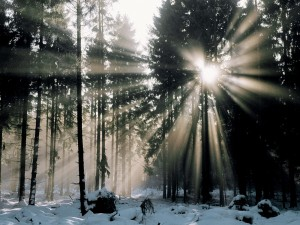 Sol brillando en un bosque nevado