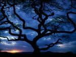 Bonito árbol visto al amanecer
