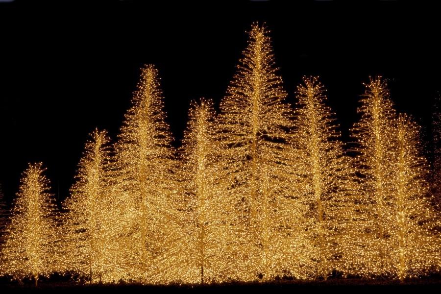 Bellos árboles iluminados en Navidad