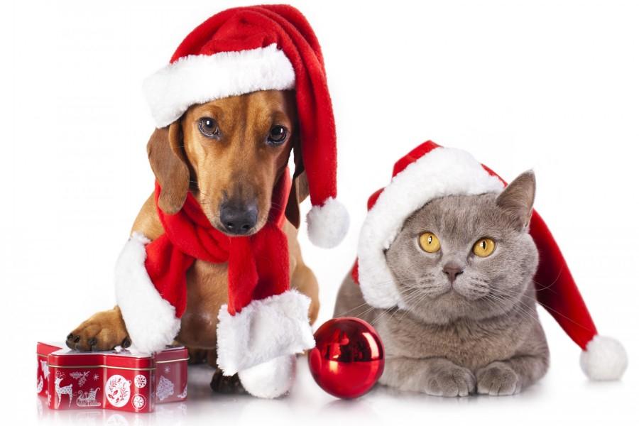 Perro y gato preparados para festejar la Navidad