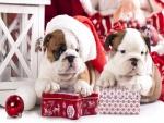 Perros bulldog junto a unas cajas de regalos navideños