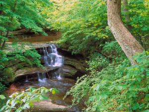 Pequeña cascada en el bosque