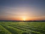 Salida del sol sobre la pradera