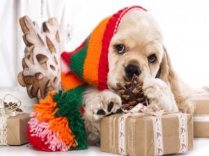 Cocker americano junto a regalos navideños