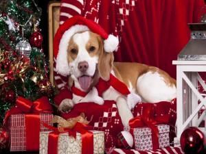 Perro junto a regalos y árbol de Navidad