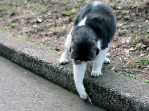 Gato cogiendo una pluma