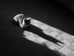 La sombra de un gato