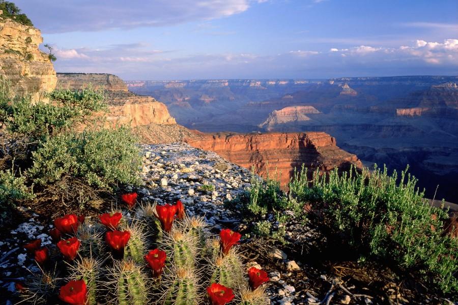 Cactus en el Parque Nacional del Gran Cañón